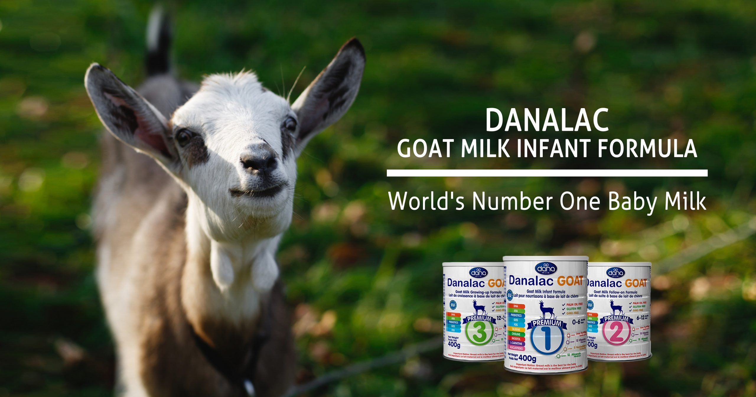 DANALAC Goat Milk infant formula - World Best Baby Milk